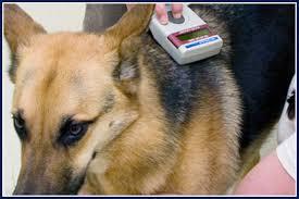 Microchipped dog July 4th found dog