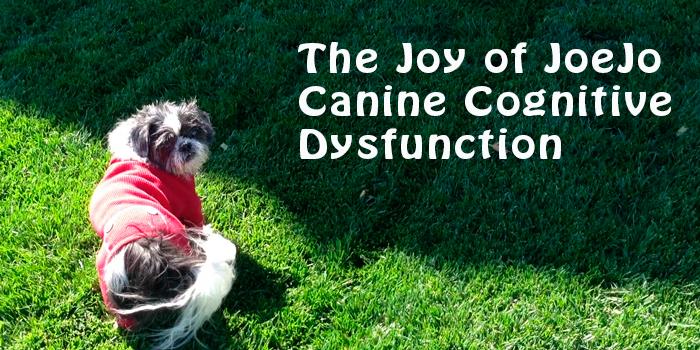 Canine Cognitive Dysfunction