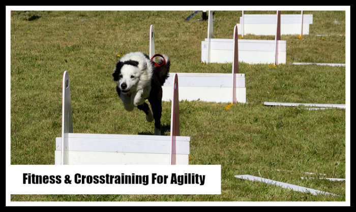 Cross-training for your Agility Dog