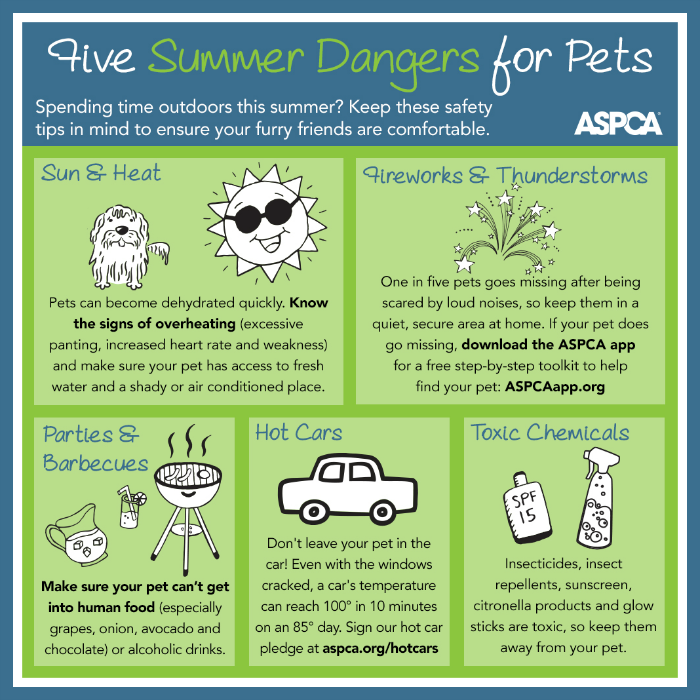 Pet Safety Info-graphic by ASPCA