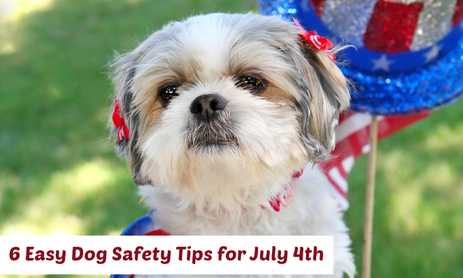 Dog Safety July 4th