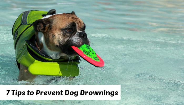 dog drownings