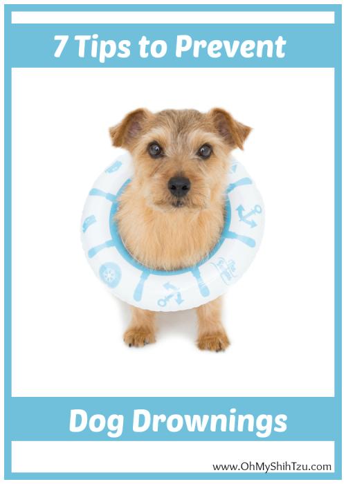 Dog Drowning Tips