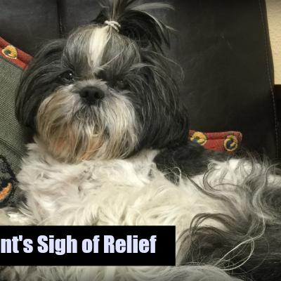 A Pet Parent's Sigh of Relief