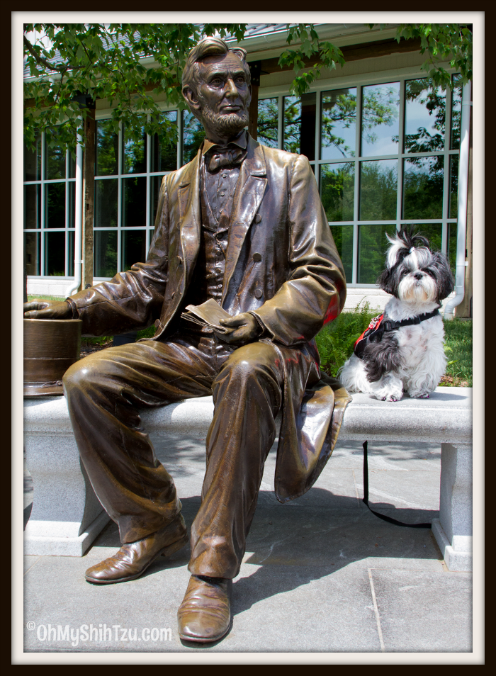 Shih Tzu Travel Riley sits with Abe Lincoln