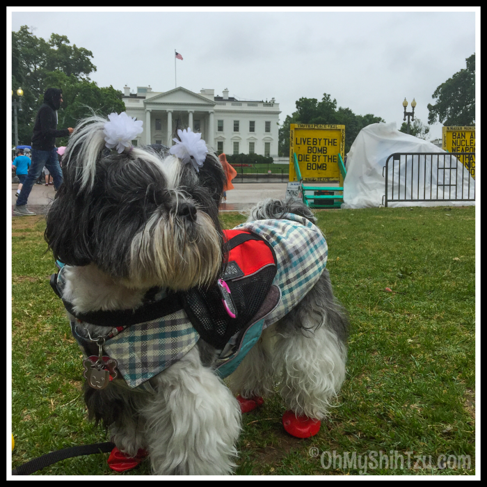 Riley Visits the White House