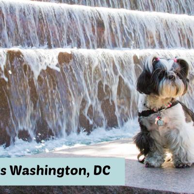 Shih Tzu Travel to Washington DC