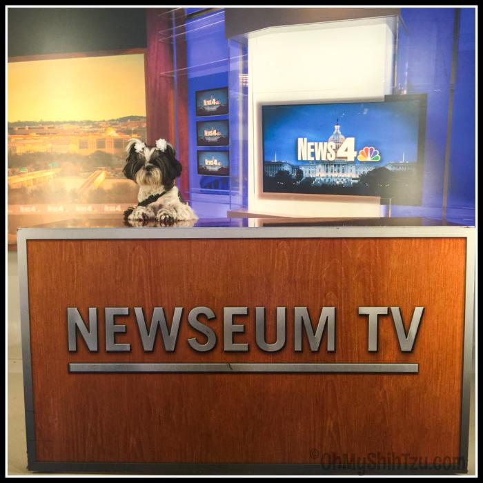 The Littlest News Anchor