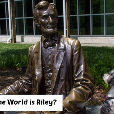 Shih Tzu Travel: Where in the World is Riley?
