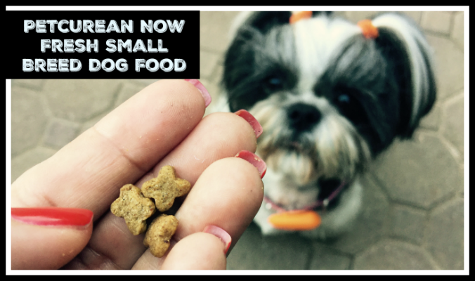 @Petcurean Now Fresh Small Breed Dog Food