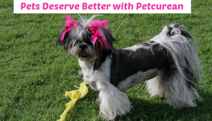 Shih Tzu , Pets Deserve Better with Petcurean