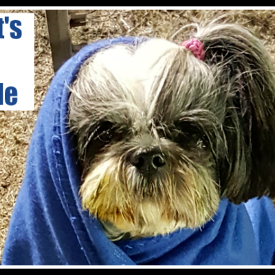 Oh Shih Tzu It's Cold Outside