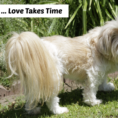 Rescue Dog … Love Takes Time