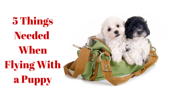 5 Things Needed When Flying with a Puppy