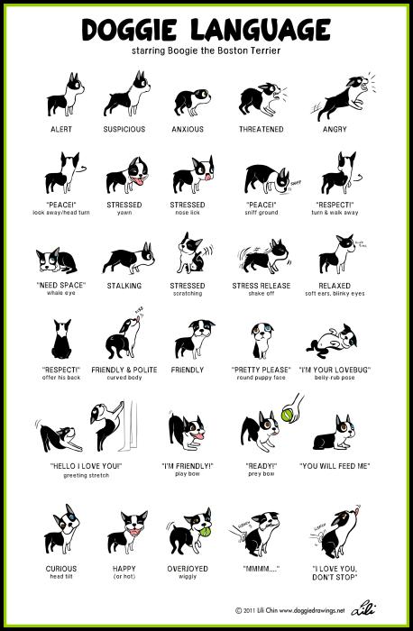 Puppy Introductions, Dog Body Language Chart by Lili Chin