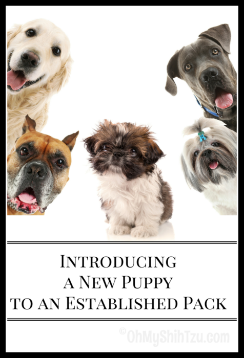 Introducing a New Puppy