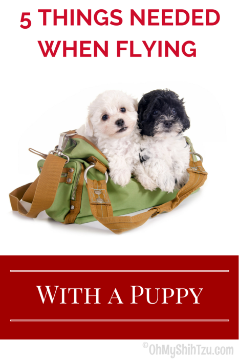 Flying with a Puppy, Puppies in a duffle bag
