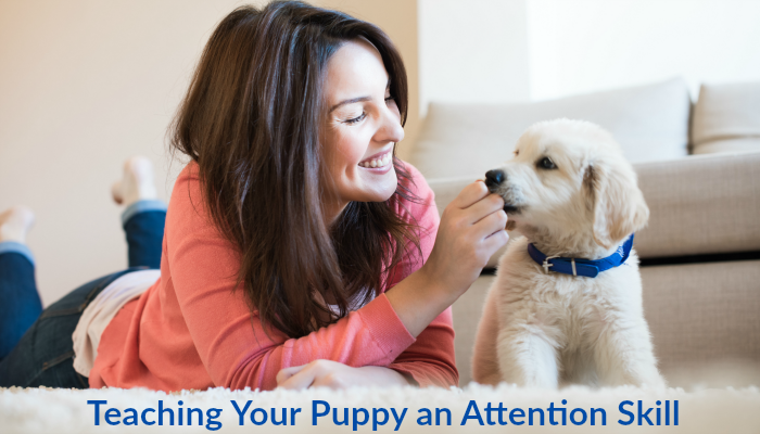 Puppy Training an Attention Skill for your puppy