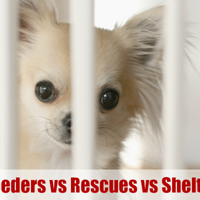 Dog Breeders , Rescues & Shelters