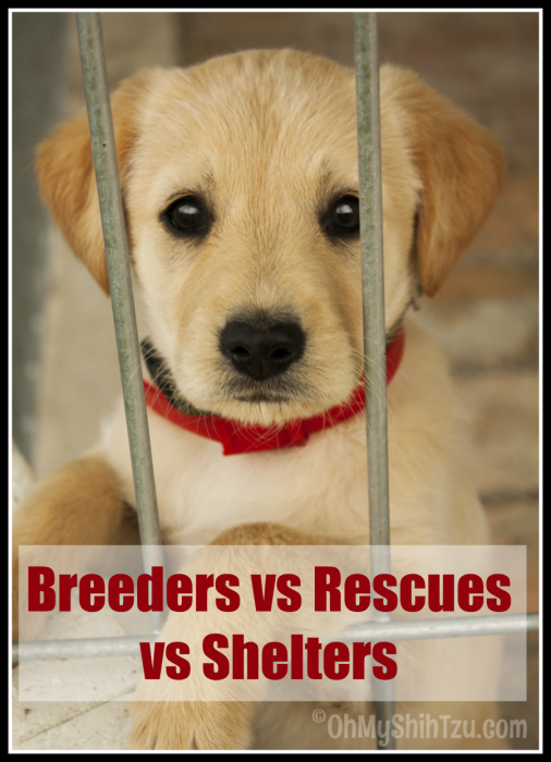 Dog Breeders
