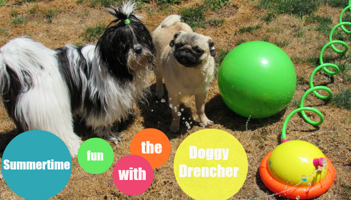 Summertime Fun with the Doggy Drencher